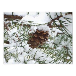Fotografía de la naturaleza del invierno del cono fotografía