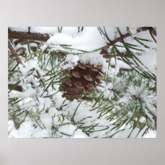 Fotografía de la naturaleza del invierno del cono póster