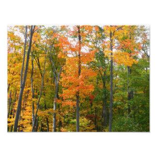 Fotografía de la naturaleza del otoño de los fotografía