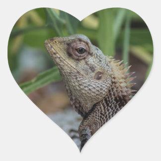Fotografía de la naturaleza del reptil del lagarto calcomania de corazon personalizadas