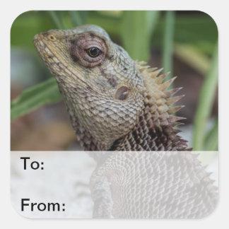 Fotografía de la naturaleza del reptil del lagarto colcomanias cuadradass