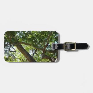 Fotografía de la naturaleza del verde del árbol etiquetas para maletas