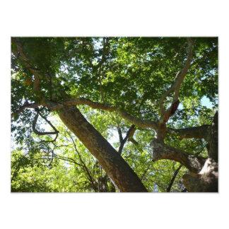 Fotografía de la naturaleza del verde del árbol fotografías