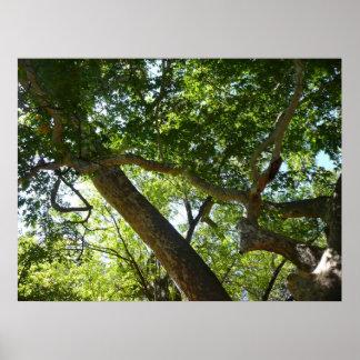 Fotografía de la naturaleza del verde del árbol póster