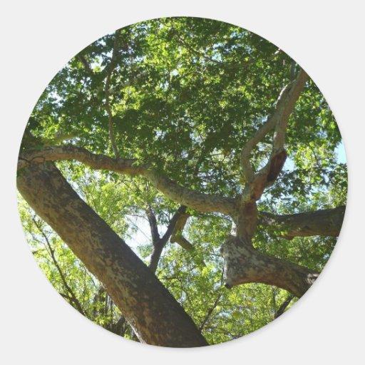Fotografía de la naturaleza del verde del árbol pegatina redonda