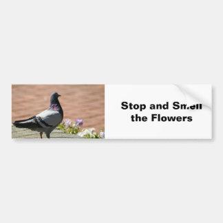 Fotografía de la paloma pegatina para coche