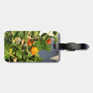 Fotografía de la planta del habanero con pimientas etiquetas bolsa