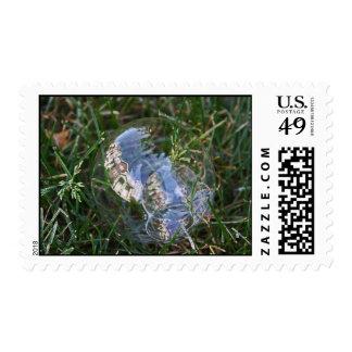 Fotografía de la reflexión de la burbuja sellos