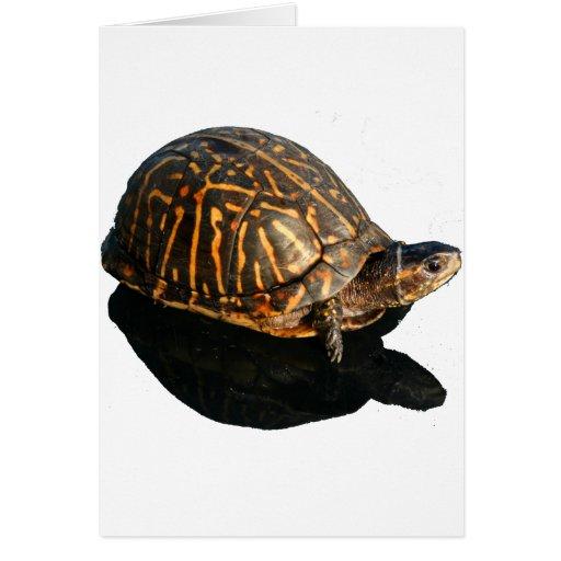 Fotografía de la tortuga de caja de la Florida con Felicitacion