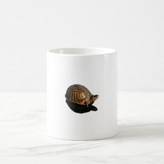 Fotografía de la tortuga de caja de la Florida con Taza De Café