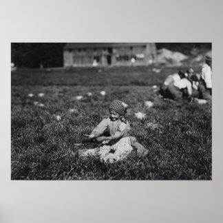 Fotografía de los arándanos de la cosecha de la ch posters