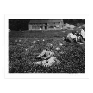 Fotografía de los arándanos de la cosecha de la postal