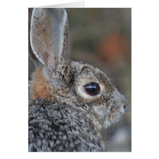 Fotografía de los conejos de los animales de la tarjeta de felicitación