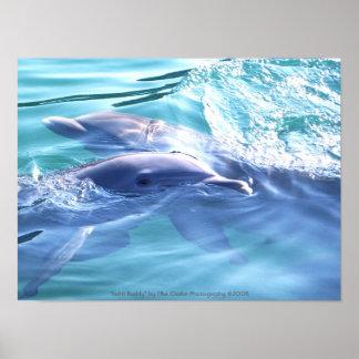 Fotografía de los delfínes póster