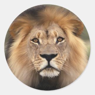 Fotografía de los leones etiquetas redondas