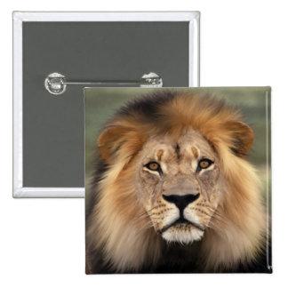 Fotografía de los leones pin cuadrado