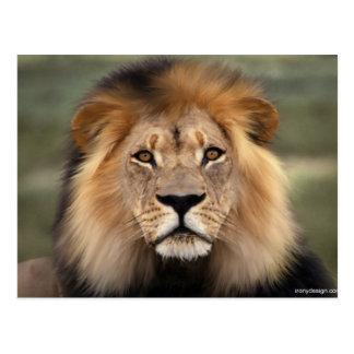 Fotografía de los leones postal