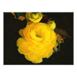 Fotografía de los rosas amarillos
