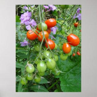 Fotografía de los tomates y de las flores de la póster