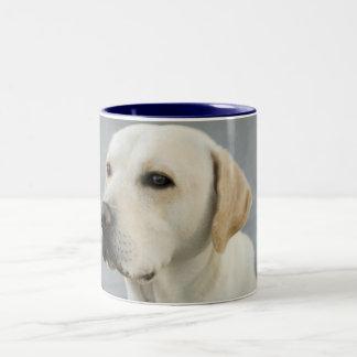 Fotografía de oro del labrador retriever taza de dos tonos