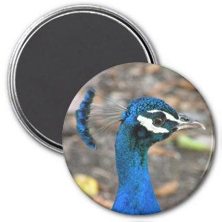 Fotografía de pavoreal magnet