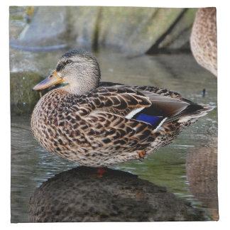 Fotografía de reclinación de los patos