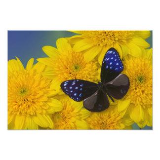 Fotografía de Sammamish Washington de la mariposa
