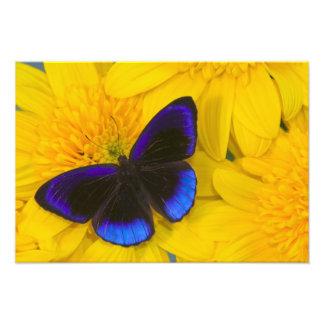 Fotografía de Sammamish Washington de la mariposa  Arte Fotográfico