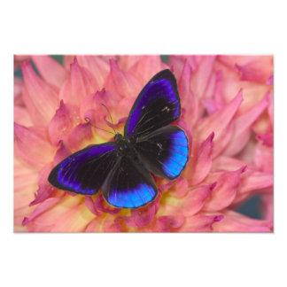 Fotografía de Sammamish Washington de la mariposa  Foto