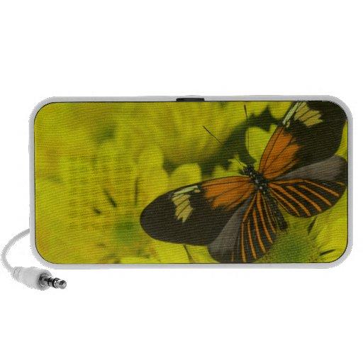 Fotografía de Sammamish Washington de la mariposa  Notebook Altavoces