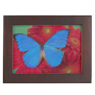Fotografía de Sammamish Washington de la mariposa  Caja De Recuerdos