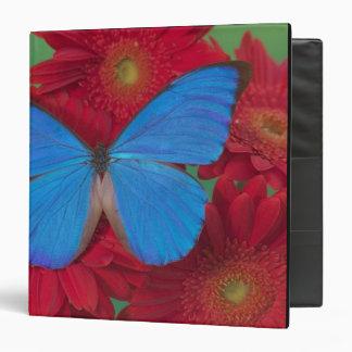 "Fotografía de Sammamish Washington de la mariposa  Carpeta 1 1/2"""
