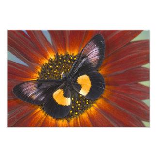 Fotografía de Sammamish Washington de la mariposa Cojinete