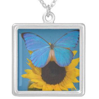 Fotografía de Sammamish Washington de la mariposa Colgante Cuadrado