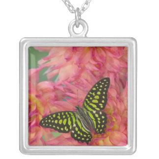 Fotografía de Sammamish Washington de la mariposa Collar Plateado