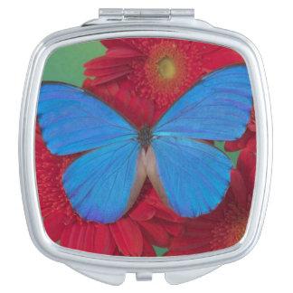 Fotografía de Sammamish Washington de la mariposa  Espejo De Maquillaje