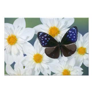 Fotografía de Sammamish Washington de la mariposa Fotografías