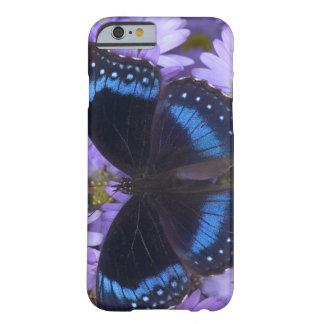 Fotografía de Sammamish Washington de la mariposa Funda Barely There iPhone 6