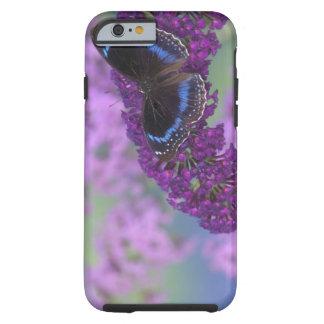 Fotografía de Sammamish Washington de la mariposa Funda Resistente iPhone 6