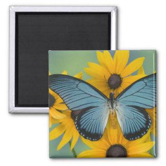 Fotografía de Sammamish Washington de la mariposa  Iman Para Frigorífico