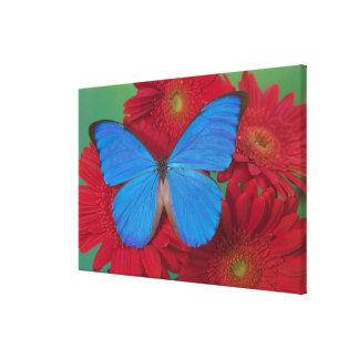 Fotografía de Sammamish Washington de la mariposa  Impresion En Lona