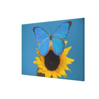 Fotografía de Sammamish Washington de la mariposa  Impresiones De Lienzo