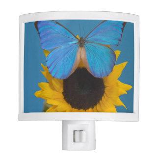 Fotografía de Sammamish Washington de la mariposa  Lámpara De Noche