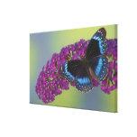 Fotografía de Sammamish Washington de la mariposa  Impresion De Lienzo