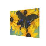 Fotografía de Sammamish Washington de la mariposa Lienzo Envuelto Para Galerias