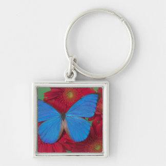Fotografía de Sammamish Washington de la mariposa  Llavero Cuadrado Plateado