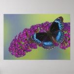 Fotografía de Sammamish Washington de la mariposa  Impresiones