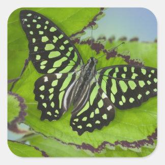 Fotografía de Sammamish Washington de la mariposa  Colcomanias Cuadradas Personalizadas