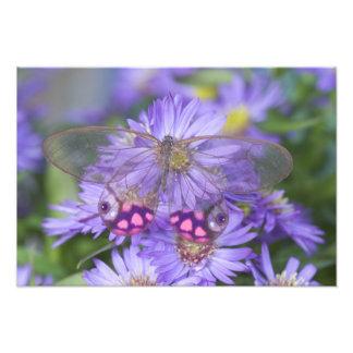 Fotografía de Sammamish Washington de la mariposa  Impresion Fotografica