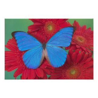 Fotografía de Sammamish Washington de la mariposa  Arte Fotografico